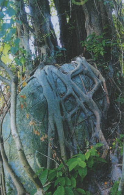 说明: 一張含有 室外, 植物, 樹, 木頭 的圖片  自動產生的描述