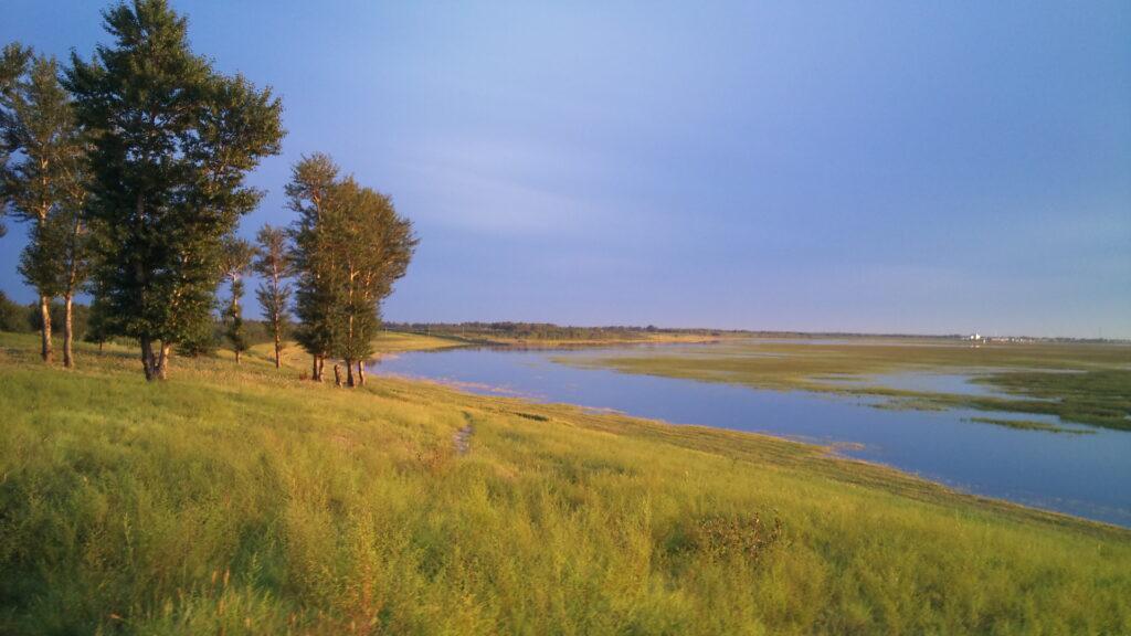 一張含有 草, 室外, 曠野, 直立的 的圖片  自動產生的描述